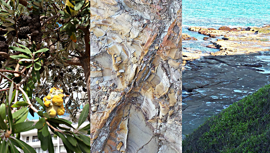 plant and beach patterns found in Newcastle, NSW